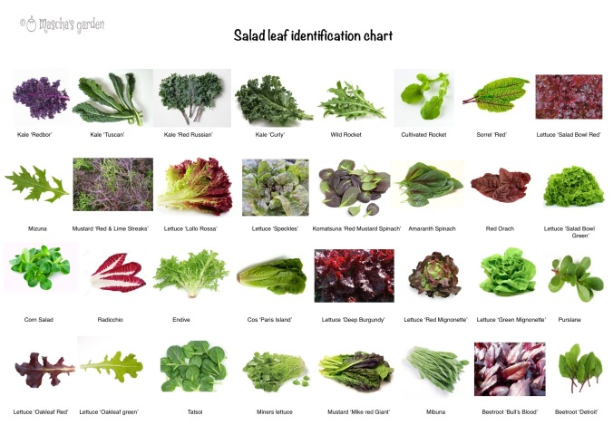 salad leaf identification