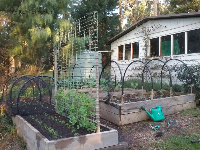 netted garden beds